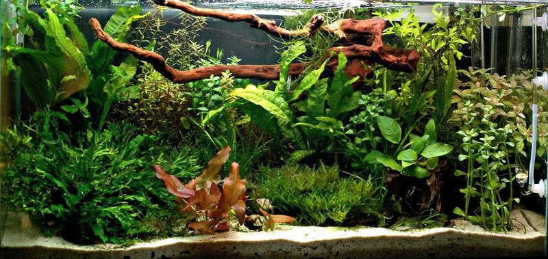 Как сажать аквариумные растения без корней 35