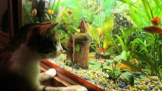аквариум с рыбками и грунтом