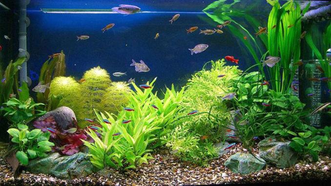 аквариумный грунт и рыбки