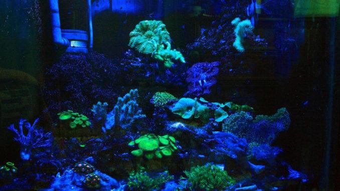 аквариум на ночь выключать