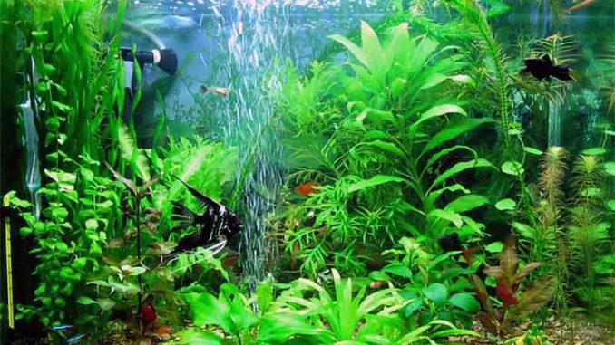 оптимальная жесткость воды в аквариуме