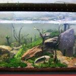 Жесткость воды в аквариуме — на что влияет, как управлять