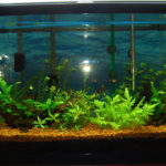 Подмена воды в аквариуме, как часто делать?
