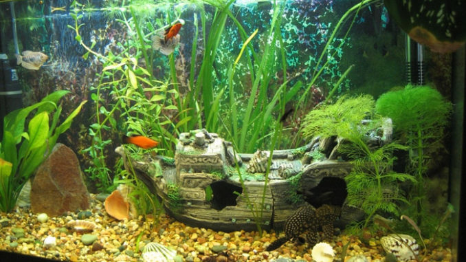 показатели ph в аквариуме