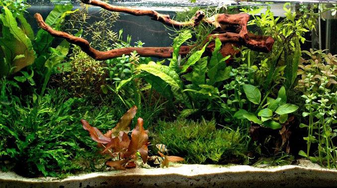 сажать аквариумные растения