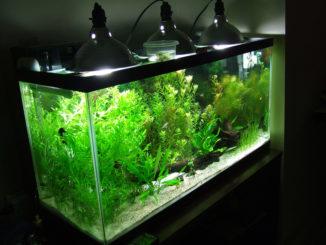 свет для аквариумных растений