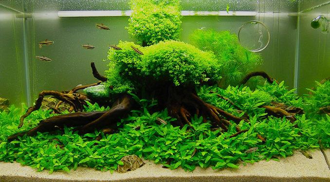уровень кислотности воды в аквариуме