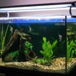 Какой должен быть уровень воды в аквариуме