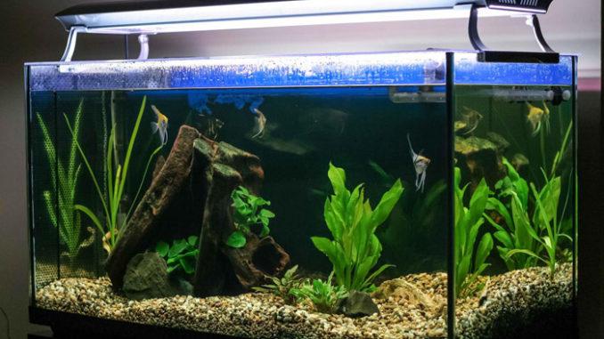 уровень воды в аквариуме