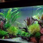 Рыбки для первого аквариума, как выбрать